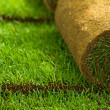 Stock Photo: Turf grass rolls closeup