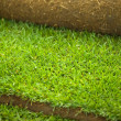 Turf grass roll closeup — Foto Stock