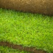 Turf grass roll closeup — Stock fotografie