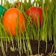 The science of easter eggs in the grass - Stock Photo