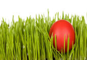 Red easter egg in the grass - isolated — Stock Photo