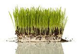 Homegrown plants — Stock Photo