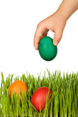Kid hand putting colorful easter eggs in the grass - isolated — Stock Photo