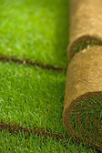 Turf grass rolls — Photo