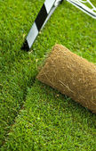 Turf grass roll on sport field - closeup — Stock Photo