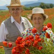 Senior couple picking flowers on a poppy field — Stock Photo