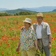 Royalty-Free Stock Photo: Senior couple on poppy field in early summer