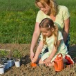 Planting seedlings in spring time - Photo