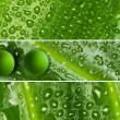 Waterdrops on leaf texture - banners — Stock Photo