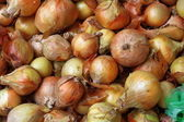 Fresh onions — Stock Photo