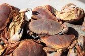 Rå krabbor — Stockfoto