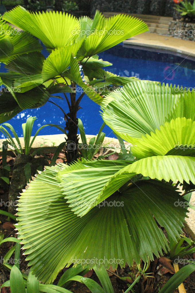 Plant at Swimming pool — Stock Photo #6379875