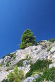Zen Tree — Stock Photo