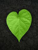 Heart shaped leaf on cracked soil — Stock Photo