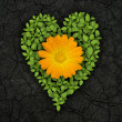 Green heart on cracked soil — Stockfoto