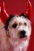 Devilish dog — Stock Photo