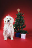 Dog next to Christmas tree — Stock Photo
