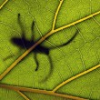 Stock Photo: INSECT ON LEAF