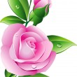 Royalty-Free Stock Vector Image: Pink rose