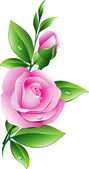 Pink rose — Stock Vector