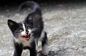 Baby Cat — Stock Photo