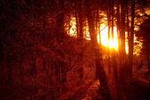 альпы на закате - poira(valtellina) - италия — Стоковое фото