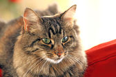 Cat attitude — Stock Photo