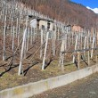 Vineyards in Valtellina (northern Italy) — Stock Photo