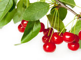 Ripe red cherry isolated on a white background — Stock Photo
