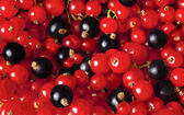 Background from blackberries and currants close up — Stock Photo