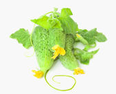 Green cucumbers isolated on white background — Stock Photo