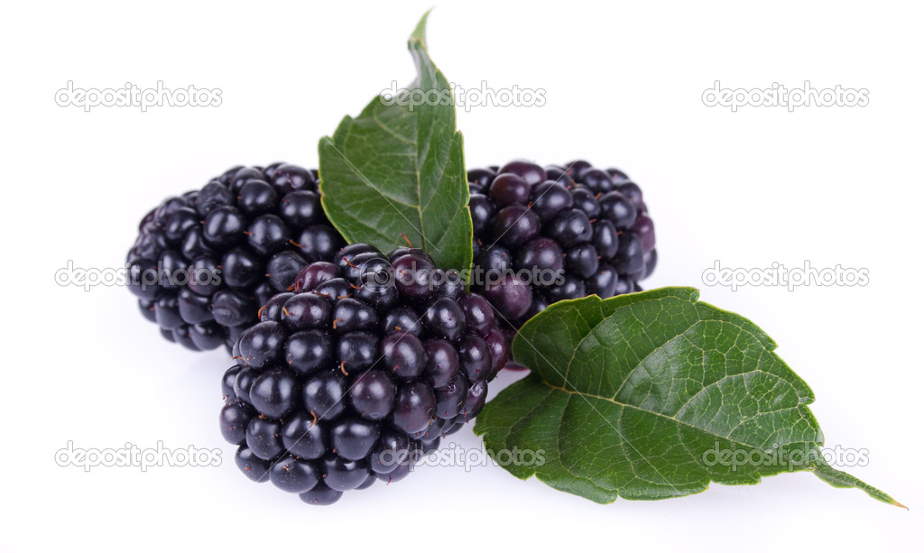 Berry blackberry closeup on white background — Stock Photo #6631889