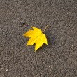 Autumn - One yellow leaf on the street — Stock Photo