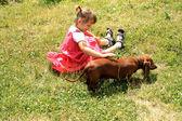 Girl playing with dog — Zdjęcie stockowe