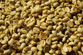 Dried coffee beans — Stock Photo