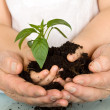 Child and adult hands holding new plant - Stock Photo