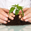 Senior and kids hands pampering a new plant — Foto Stock