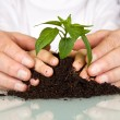 Senior and kids hands pampering new plant — Stock Photo #6405375