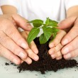 Old and young hands protecting a new plant — Stock Photo