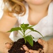Stock Photo: Little girl holding a young plant in soil - closeup