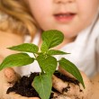 Stock Photo: Little girl looking at her plant