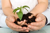 Child and adult hands holding new plant — Stock Photo