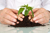 Senior and kids hands pampering a new plant — Stock Photo