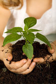 Kid hands holding a new plant in soil — Stock Photo