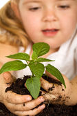 Little girl looking at her plant — Stock Photo