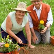 Stock Photo: Happy healthy seniors gardening
