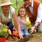 Grandparents teaching little girl the ways of gardening — Stock Photo