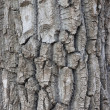 Tree bark — Stock Photo #6340630