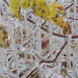 Royalty-Free Stock Photo: Freezing rain