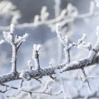 Snow crystals - Stock Photo